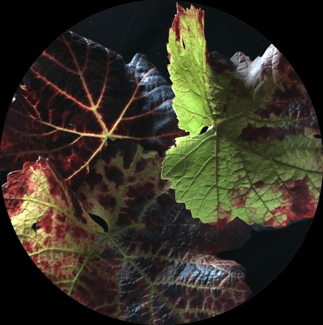 Le vins au fil des saisons, automne