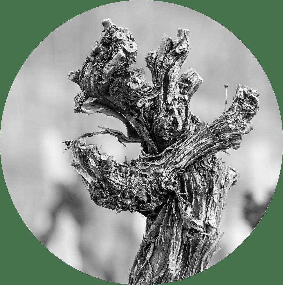 Le vins au fil des saisons, hiver