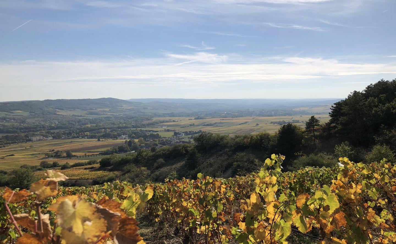 Bourgogne Santenay