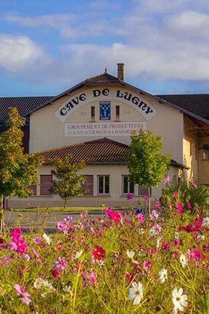 La Cave de Lugny, fleuron de l'œnotourisme en Bourgogne du Sud